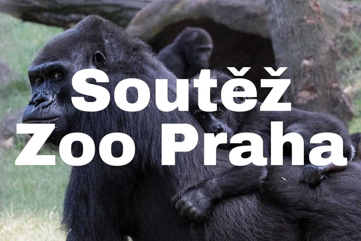 Zoo Praha vyhlašuje fotosoutěž. Nejlepší obrázky budou na billboardech
